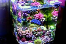Reef Tank Ideas