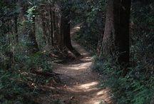 Sentieri e foreste