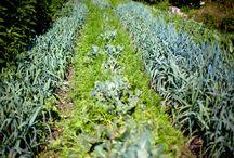 Permaculture / Jardin