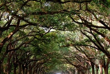 Savannah, GA / by Kimberly Schmoke