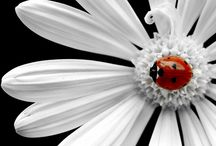 lady Bird Lady Bird Fly Away Home