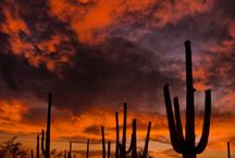Arizona / by Corrine Bell