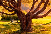 Amo l'Autunno / I love Autumn