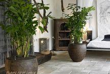 Interieur-inspiratie / Interieur   Inspiratie   Ideeën   Planten   Hydrocultuur
