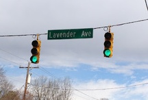 Misc Lavender Pictures