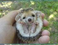 Too Cute! / by Chelsea Layne