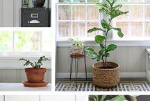 Indoor Plants for Health