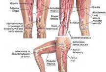 Anatomy- 2