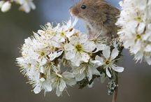 Křečci a myšky
