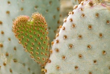 Cactus I love / by Lindi Laws