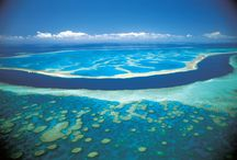 The great reef