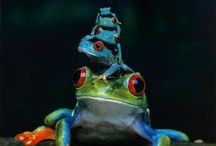FROGS / by Robyn Strum