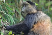"""Visit Rwanda / #Rwanda - """"Land of a Thousand Hills"""" - is a natural wonder and a haven for nature lovers. Popular for the Mountain Gorillas, Rwanda is a hotbed of biodiversity, rich cultures, beautiful landscapes & scenery and a wonderful climate."""