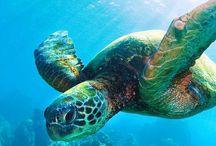 Sea Turtles Patch Program