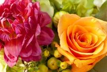 Tangerine & Pink