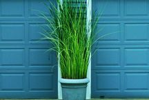 Outdoor decorating / Planter of long grass