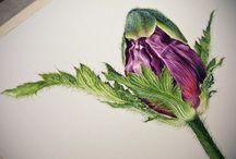 watercolor idea