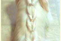 Fotos impresionantes / Fotos bonitas de peinados, poses, e.t.c. de animales o mascotas