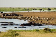 Tanzania Low budget safari / Serengeti National Park, Ngorongoro Crater, Lake Manyara, Tarangire National Park, Arusha