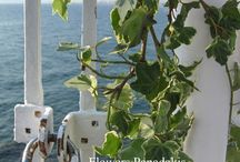 wedding with sea ,sun and flowers /  wedding in Greece near the sea with flowers and olives
