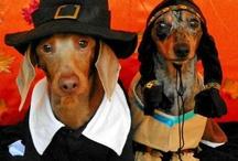 Thankful Pups