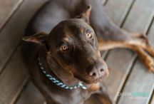 Pet Photography | Tanya Greene Photography
