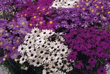I love Flowers! / by Kris Brookshire