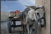 NO!  al maltrato animal :(