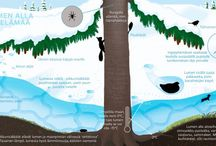 Ympäristöoppi, eläinten talvi