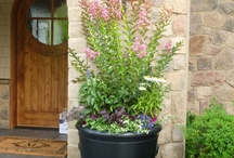 Outdoor Decorative Plant Containers / by All Oregon Landscaping Inc