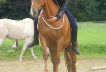 Horse - Agility