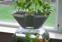 Growing Food / by Ei Ein