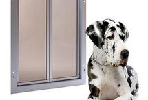 Dog door and cat shelves