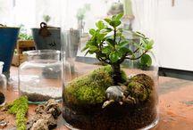 Natura, przyroda, kwiaty