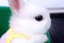 Cute Animal, LOVE ^_^