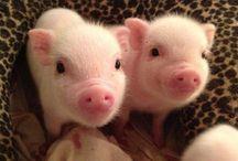 Cute little piggies♡