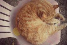my cat /  I REALLY LOVE MY CAT !!!