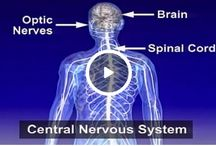 Multiple sclerosis (MS) / What is MS?