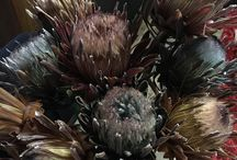 Dried proteas For sale! / Limited availability