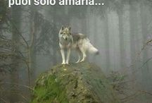 muttley wolf