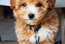 My Future Pups!