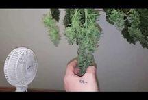 How to Grow Pot