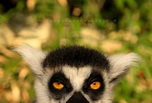 Critters / by Melissa Walpole