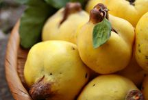 quince fruit tree