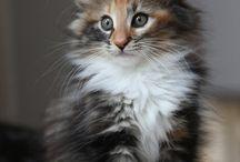 Cats / Cats kittens. :)