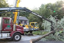 Affordable Tree Removal Amherst