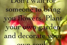 How Does Your Garden Grow / by Denise Red Flower Fanatic