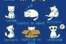 De perros y gatos