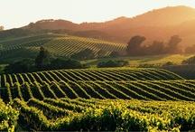 VineYards & Wine Cellars