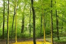Wald Kunst